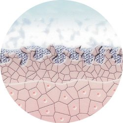 mikroderma-1.jpg
